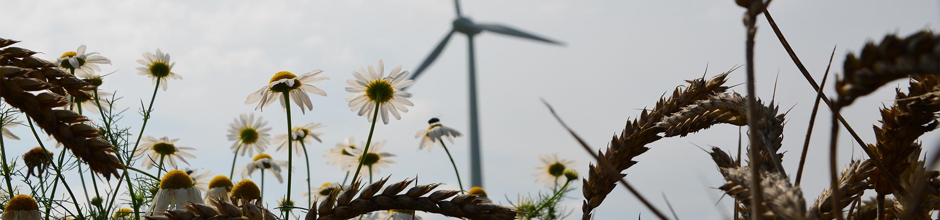 SL Windenergie Blumen Kornfeld